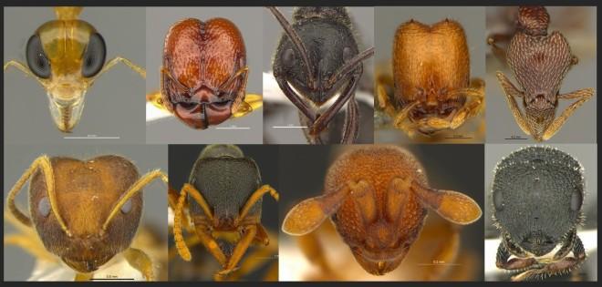 Ant Headshots