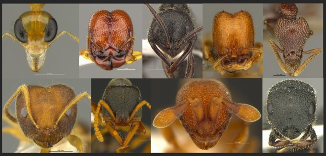 Ant Headshots