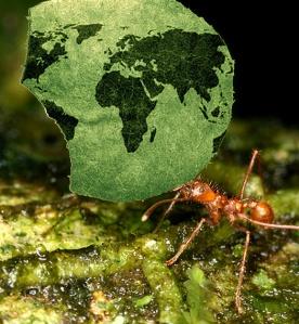 global_ants