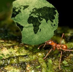 global_ants-300x298